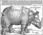 Albrect Dürer\'s Rhinocerous